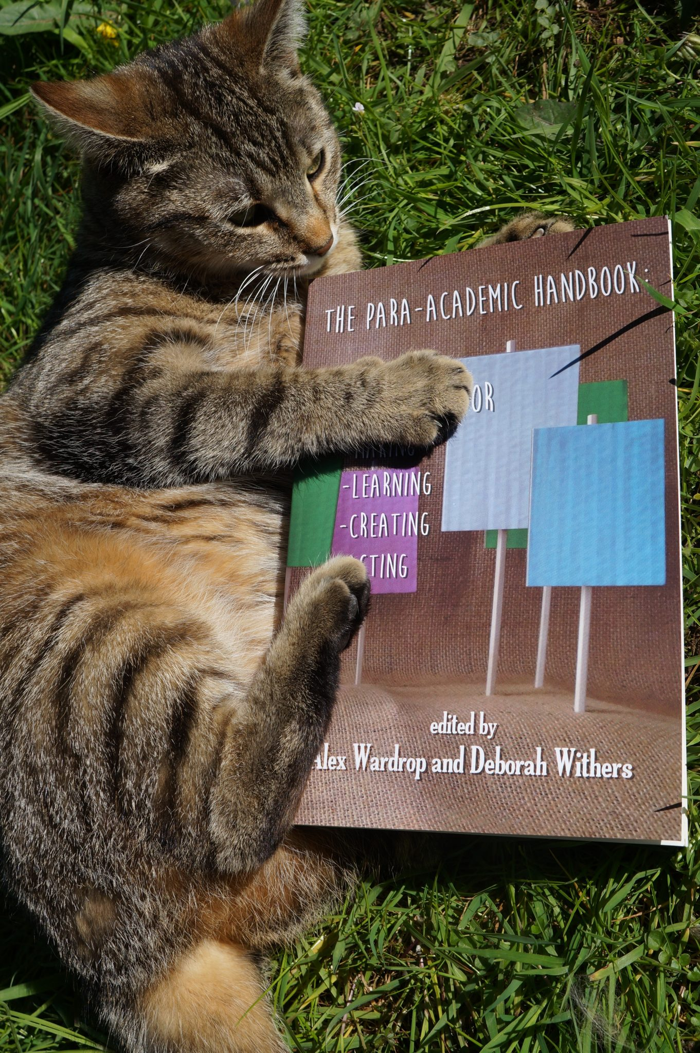 A tabby cat plays with a copy of the para-academic handbook on the grass.